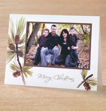 Photo Insert Cards - Boughs of Pine Photo Christmas Card Set of 18