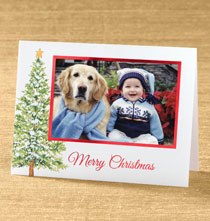Photo Insert Cards - Christmas Evergreen Photo Christmas Card set of 18