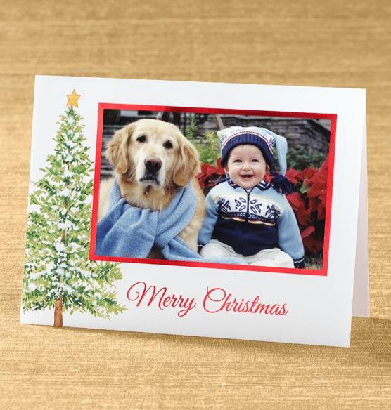 Christmas Evergreen Photo Christmas Card Set Of 18