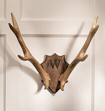 Holiday Decor - Personalized Wood Antler Mount