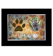 Pets - Rescued Year To Remember Cat 4 Coin Frame